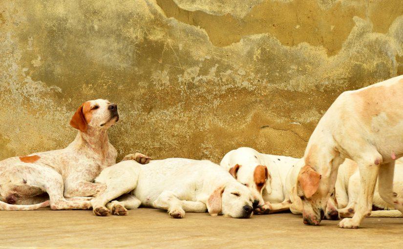 Gå en hunduppfödarutbildning